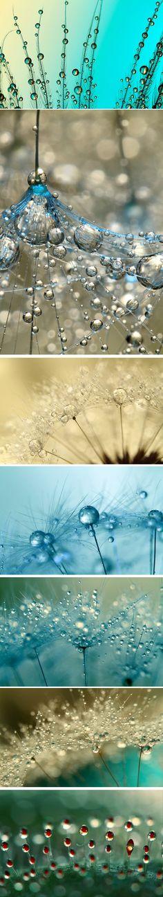 Quelques perles matinales  Une très belle réalisation de la photographe britannique Sharon Johnstone, qui shoote la rosée matinale sur de nombreuses fleurs. Une claque visuelle avec ces perles miroitantes, empreintes de couleurs variées le temps de quelques heures. Toujours intéressant de voir la perfection de la nature à travers l'art.