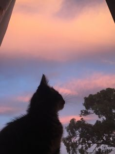 My Happy Place, Aliens, Aesthetic Wallpapers, Cats And Kittens, Random Stuff, Cute Animals, Sunset, Beautiful, Fluffy Kittens