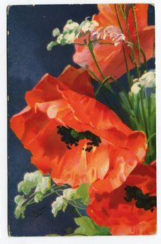 Catharina C. Klein - vintage postcard from Germany, Poppy flowers...
