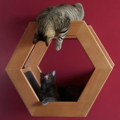 DIY  Modern Cat Wall Perch  (Just the pic, the link has no additional info.)