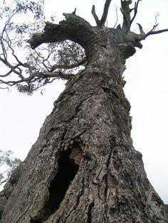 Gnarled Tree by Matthew Tulett, via Flickr