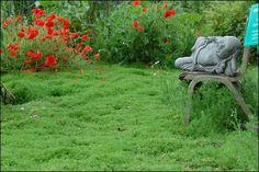 Chamomile lawn at Dilston Physic Garden Chamomile Lawn, Landscape Design, Garden Design, Water Garden Plants, Fruit Flowers, Ornamental Plants, Garden Inspiration, Garden Ideas, Lawn And Garden