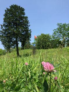 国営昭和記念公園ディスクゴルフコース#14