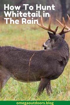 You need to hunt a little differently in the rain. When it is raining, you will want to set in a stand that offers shorter shots. This is because rain quickly washes away blood trails. If you put a 60 yard shot on a buck with a bow, the chances of finding him are severely decreased.  #hunting #hunt #hunter #outdoors #fishing #deerhunting #nature #bowhunting #jagd #chasse #deer #huntinglife #jakt #photography #huntingseason #caza #wildlife #archery