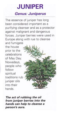 Sacred celtic tree - Juniper - Pinned by The Mystic's Emporium on Etsy Healing Herbs, Medicinal Plants, Healing Spells, Hedge Witch, Herbal Magic, Celtic Tree, Vintage Diy, Book Of Shadows, Irrigation