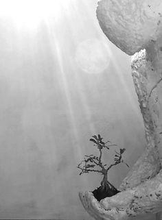 Samuel Allerton. Bonsai pilgrim. Peaceful sculpture.