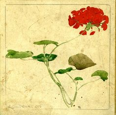 WILLIAM NICHOLSON (1872-1949) Untitled (Geraniums), c 1893