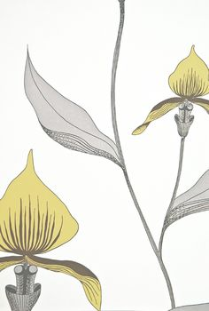 Orchid Floral Wallpaper Restyled White wallpaper with large illustrated orchid design in lemon yellow and grey.