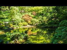 Música Relajante de la Naturaleza con Sonidos de Agua: Meditación, Yoga, Tai Chi, Reiki, Pilates - YouTube