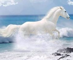 Beautiful white horse running through The Waves! Most Beautiful Animals, Beautiful Horses, Beautiful Creatures, Pretty Horses, Horse Love, Gray Horse, Running On The Beach, Majestic Horse, White Horses