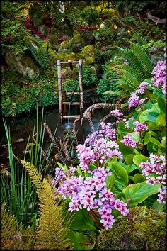 Early Spring Japanese Garden, Hatley Park, Vancouver Island, British Columbia, Canada