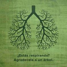 ¿Estás respirando? Agradecele a un árbol. / Stai respirando? Ringrazia un albero. #polmoni
