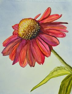 Barbara's Coneflower