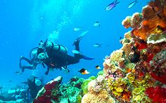 Cozumel is known as the Best Place to go Snorkeling & Diving. Experience the underwater world of Cozumel with true professionals that have many 5 star reviews on Tripadvisor.