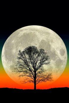 Beautiful Moon, Beautiful Tree!