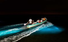 A Living Galaxy: Bioluminescent Beauty in Southern Belize