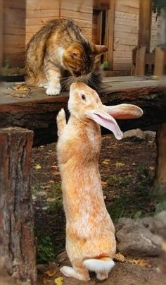 5 strange and amazing animals friendships :) i had a cat and a white bunny that hung out together. i had another cat and two hens that hung out together,too. strange bed fellows.