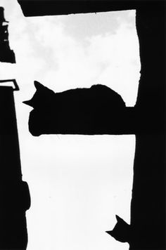 Cairo Cats by Walter Rothwell. S)
