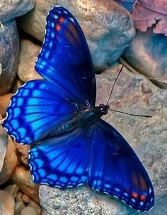 Types of Butterflies pictures Different Types of Butterflies Butterfly Painting, Butterfly Wallpaper, Butterfly Flowers, Blue Butterfly, Butterfly Wings, Madame Butterfly, Beautiful Creatures, Animals Beautiful, Cute Animals