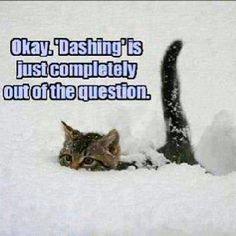 From FB-- Another funny photo I found on FB! Happy Friday Everyone!  #cat #cats #kitty #kitten #kitties #animal #animals #animallover #snow #funny #quote #snowing #joke From FB-- Another funny photo I found on FB! Happy Friday Everyone!  #cat #cats #kitty #kitten #kitties #animal #animals #animallover #snow #funny #quote #snowing #joke