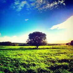 "@phantastic420's photo: ""#Goodmorning ☻☻☻ #朝の1枚   One taken in the morningღ  『 #tree 』#sunrise  おはようございますღ  8/19ダイヤ後の朝です☼  Have a beautiful day!!!!! #sun"""