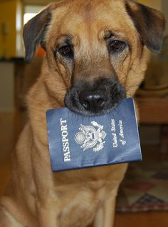 Travelling With Your Pet | #travel #pets