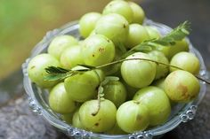 Amalaki, commonly known as Indian gooseberry or amla, is considered one of the m… - Health Health And Wellness, Health Tips, Health Fitness, How To Grow Gooseberries, Gooseberry Plant, Ayurvedic Hair Care, Healthy Hair Tips, Superfoods, Hair Loss