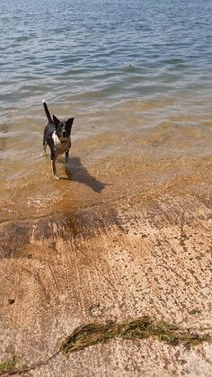 Home – Big Cedar Pet Care - Pet Sitting and Dog Walking Services Dog Walking Services, Pet Sitting Services, Cedar Lake, Pet Care, Cool Girl, Your Pet, Boat, Cool Stuff, Pets