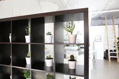 Parallel Pulse's Live/Work Loft   succulents in a bookshelf as room divider
