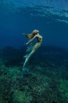 """ Hannah Mermaid "" Photographer: Jim Ward ༺ß༻ Siren Mermaid, Mermaid Cove, Mermaid Fairy, Sea Siren, Mermaid Kisses, Fantasy Mermaids, Real Mermaids, Mermaids And Mermen, Fantasy Creatures"