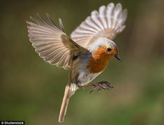 Migrating birds appear to have a 'sixth sense' which means they always manage to find thei...
