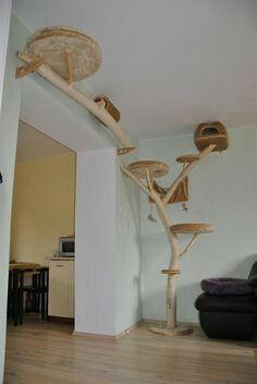 kitty cat playground. Tree to perch