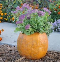 pumpkin container - 5 Fall container ideas. What an awesome idea!