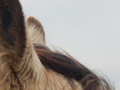 Horse Ears by Angela R. Watts