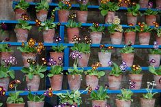 Primroses in Pots. I'll take one of each.