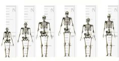 Giant Human Skeletons: Blood Types and the Origins of the Nephilim