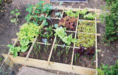 Striedanie plodín: Efektívny spôsob, ako predísť únave pôdy   Záhrada.sk Backyard Vegetable Gardens, Potager Garden, Vegetable Garden Design, Outdoor Gardens, Garden Bed, Types Of Vegetables, Organic Vegetables, Growing Vegetables, Organic Gardening