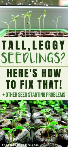 Indoor Gardening Tip: 4 common seed starting problems and how to fix them! Vegetable Gardening   Organic Gardening  