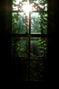 What a gorgeous window, bringing the sun streaming in through tree leaves!