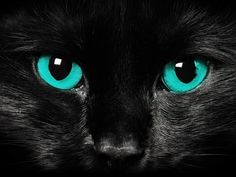 5 Cats with stunning eyes, they look like a shining stone :) Black Cats, Bing Images, Creative Art, Art Photography, Cats, Artistic Photography, Creative Artwork, Fine Art Photography