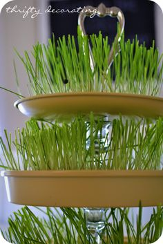 Create tiered rack and grow your own wheat grass!