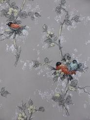 oranje en blauwe vogels