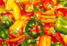 Bell Peppers- Color Pencil art by Gary Greene ~ hyper-realistic art