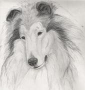 Collie sketch by me