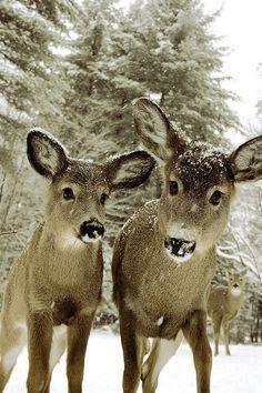 such beautiful creatures
