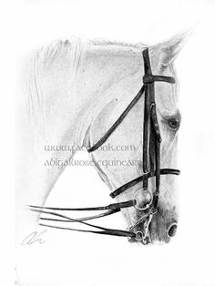 Graphite pencils, this gorgeous horse was a commission from afar! He was requested for a birthday present, and travelled all the way to Bahrain!  For your own personal piece of your four legged friend, please contact abigail.rose06@gmail.com or visit www.facebook.com/abigailrose.equineart