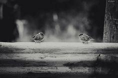 grey birds on a grey day