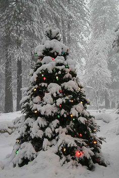 """I'm dreaming of a white Christmas."" ~ ""Oh, Christmas tree! Oh, Christmas tree! Christmas Scenes, Noel Christmas, Country Christmas, Winter Christmas, Christmas Lights, Winter Snow, Christmas Yard, Merry Little Christmas, Vintage Christmas"