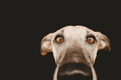 You got cookies? by Elke Vogelsang on 500px