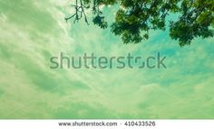Beautiful sky background with tree branches
